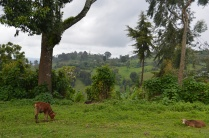 Beautiful Ethiopian landscape