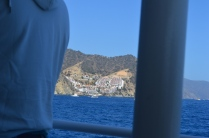 First glimpse Catalina